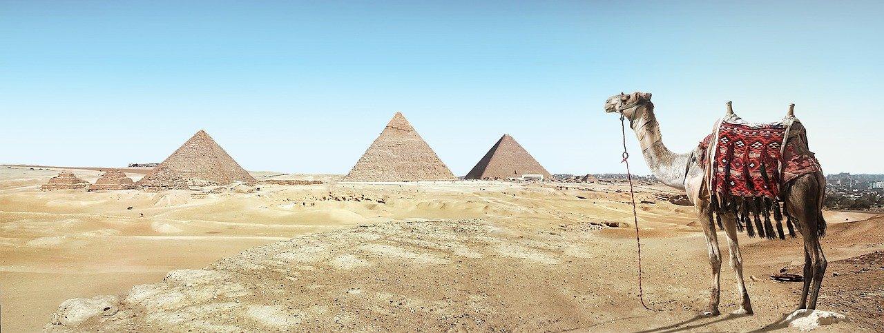 desert, camel, sand
